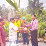 11.750 bibit Dibagikan Disbun Kembangkan Komoditi Kelapa Dalam