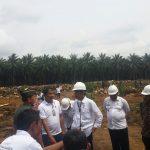 Kebun Sawit Tua Perekonomian Rakyat Menurun, Jokowi : Makanya Pemerintah Meremajakannya
