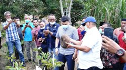 Bupati Alfedri Optimis Porang Bisa Berkembang di Kabupaten Siak